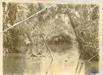 Scene on the Bompe River, Sierra Leone