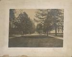 College Avenue Photo