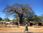 Worlds Away: Africa 2: Baobab by Jessica C. McIntosh